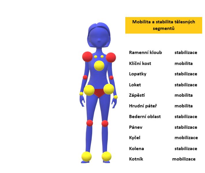 Mobilita a stabilita vybraných segmentů těla